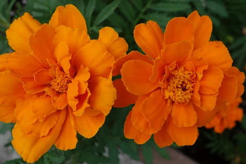 オレンジ単色
